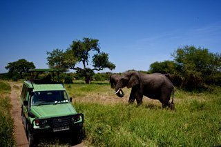 Elefant on safari